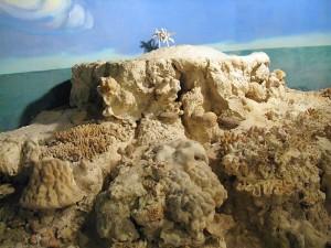 Модель кораллового рифа